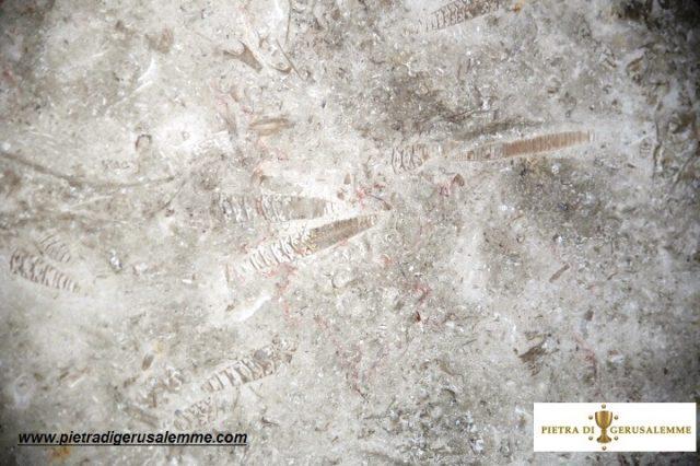 Rivestimenti in pietra naturale con fossili di grande resistenza e inassorbenza